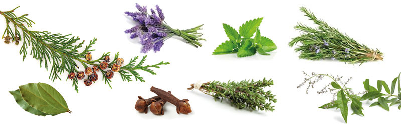 Our natural ingredients: May Chang, lavender, cedarwood, patchouli, laurel, rosemary, clove, thyme