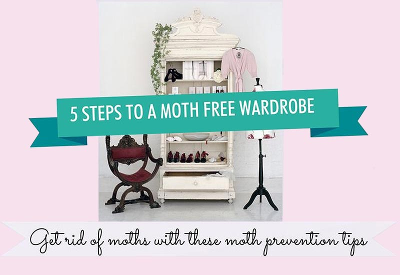 5 steps to a moth-free wardrobe